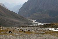 Пасущиеся лошади в долине Арчаканыша.