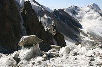 Ледниковые грибы у начала ледопада на леднике Дальний.