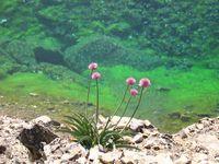 Красоты зелёного озера.