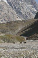 В верховьях реки Караказык Северный. Здесь река вырывается из под морен ледника.