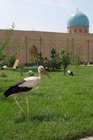 Путешествие по Узбекистану. Ташкент. Здесь аисты живут прямо на газонах.